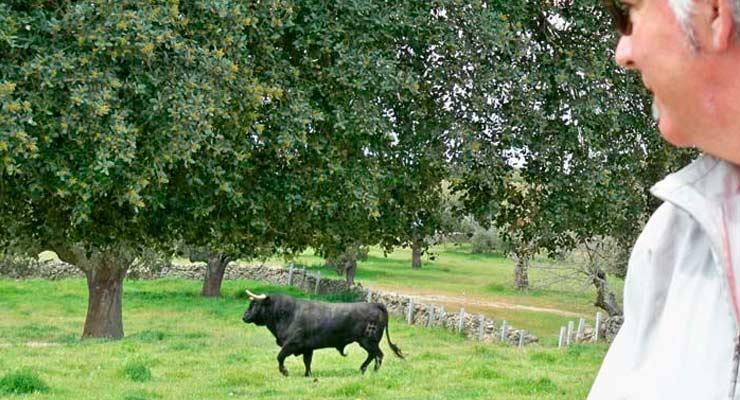 Ven a ver toros en libertad